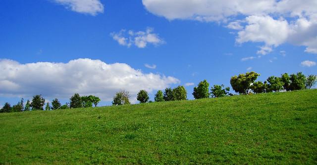 青々と茂った芝生